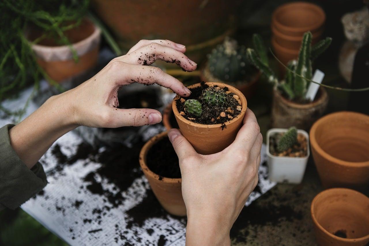 le marc de café pour le jardin