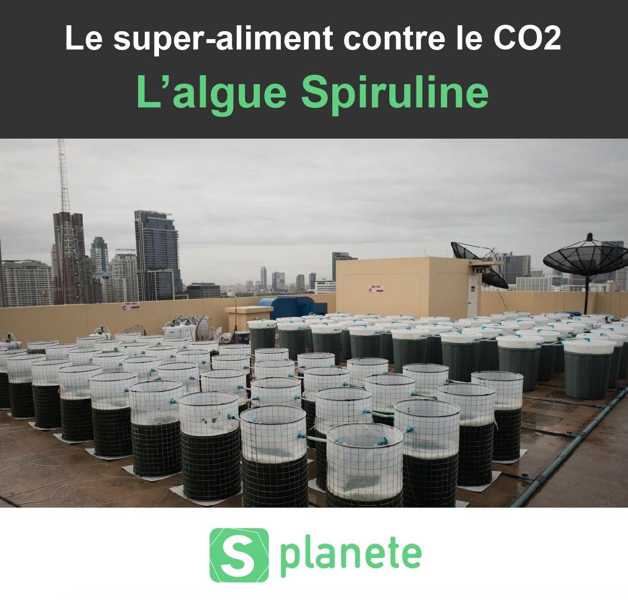 Algue Spiruline contre le CO2