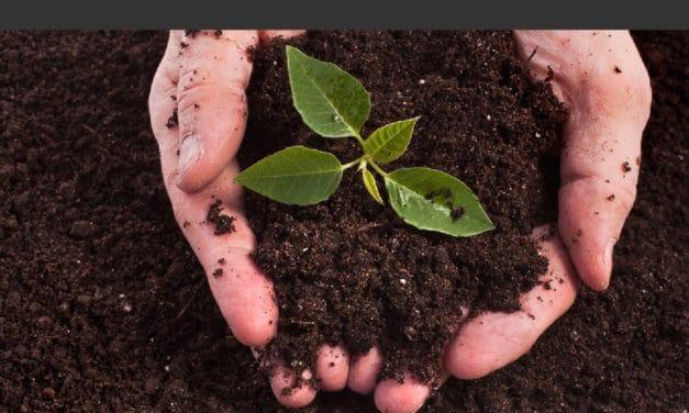 Bac à compost : Les 7 meilleurs composteurs de jardin en 2019
