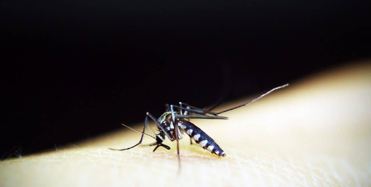 Prévention et Traitement du paludisme : Les alternatives naturelles