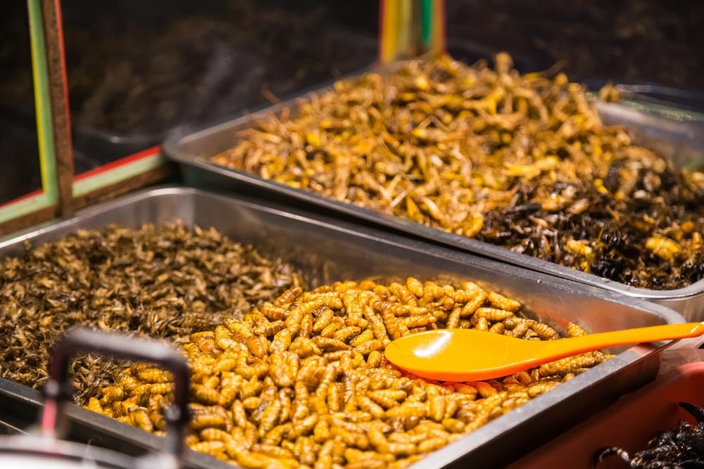 les insectes à la place de la viande