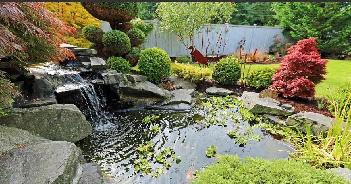 Bassin de jardin : Construire, aménager et entretenir (préformé et ...