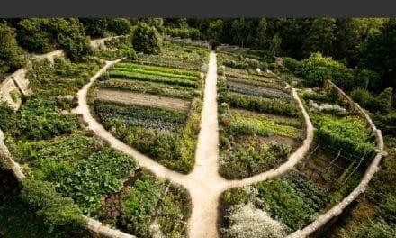Comment faire un potager en permaculture ? Définition et Design